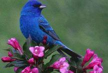 Beautiful / Beautiful everything but mostly nature / by Puma Jones