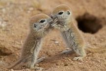 Amazing/Cute Animals
