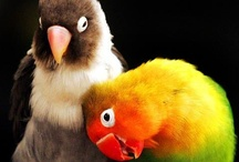 Cute Baby Animals and Birds