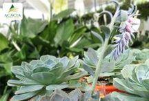 Nossos Produtos - Plantas | Vasos | Acessórios de Jardinagem / Plantas | Vasos | Acessórios de Jardinagem