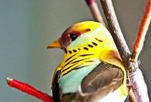 Birds and Animals / by Nancy Maynard