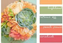 Color / by Nancy Maynard