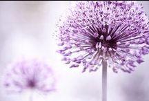 Gotta love purple! <3