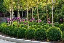 ...Garden ideas...