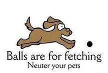 Spay & Neuter / The decision to spay or neuter your pet is an important one for pet owners. But it can be the single best decision you make for his or her long-term welfare.