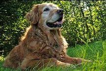 Pet Loss & Grieving