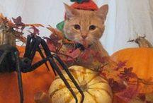 Spooktacular Pets!