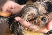 Grooming & Cleaning Tips / Clean, well-groomed fur, trimmed nails, clear eyes, and clean teeth keep your pet healthier, feeling more comfortable, looking and -- let's face it -- smelling better.