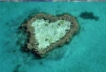Love is all you need... / For all you fiancees out there... is Love all you need? Oh yes, it is...