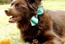 Dog Collars that Rock / Latest dog collars from Paw Treasures. www.pawtreasures.com