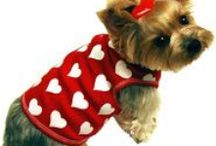 Valentine Doggie Dress Up  / Love you dog?  Here's some fun costumes we found! www.pawtreasures.com