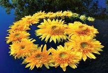 Virágból varázslat / préselt virágból készült képek, virágszobrászat
