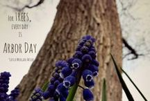 Arbor Day - What's in a Tree? / Celebrate Arbor Day, and the importance of trees, with AgAmerica Lending.