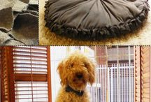 Pets / Pets / by Meb Letterman