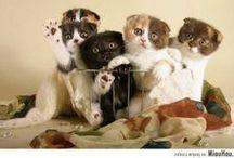Koty / Cats / Różne zdjęcia internetowych śmiesznych kotów :D