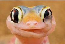 Reptiles! :) <3