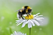 Avoir une ruche chez soi
