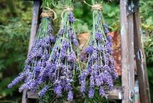 Rose and Lavender Recipes / from food to wellness