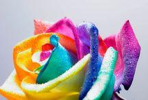 Colour / Colourful Photography