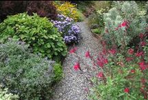 Perennials / Vivacious perennials add personality to your garden and return, year after year, for encore performances. Many require little care once established, but even the high-maintenance stars are worth a little effort in exchange for their glamour. You can rely on perennials for multi-season interest and knock-out appeal in your garden.
