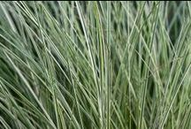 Ornamental Grasses / Ornamental grasses add texture and movement to the landscape, plus they're low maintenance and drought tolerant. Taller varieties can be used for screening, and many are even deer resistant.