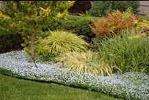 Low growing options for devonpritchard1 / Color contrasting groundcover options for under shrubs.