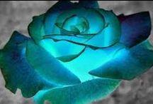 rose fiori ⚘ / Immagini di vari fiori