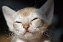 Cute <3 / Cuteness overload!