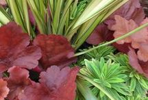 Fall & Winter Container Design / Create beautiful, colorful containers for chilly fall and winter weather. For more plant and design suggestions from Charlo, head of Swansons' In-Home Container Design Service, see  our blog, Digging Deeper (www.swansonsnurseryblog.com)