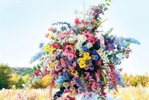 Flowers / Stunning flowers and floral displays