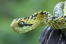 HD Snake Wallpapers / Only the Best in HD Snake Wallpapers