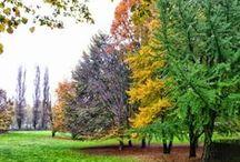 Natura e colori / Torino e dintorni
