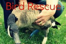 Animal Control, Rescue, and Adoption / The best and most safe ways to rescue animals and get them the help they need.