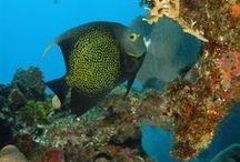 Diving / Underwater Adventures