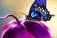 THE WONDERFUL WORLD OF BUTTERFLY'S / HOW BEAUTIFUL THEY ARE- ONE OF GODS CREATIONS!! / by Mary Simmons