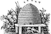 Bees & beehive images