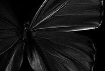 colors: black