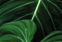 tropical leaves / green is good. tropical leaves have the most beautiful and architectonic shapes of all