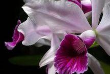 ❀ beautiful flowers ❀