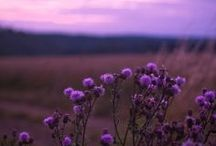 《 purple passion 》