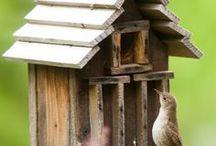 Birdhouse / Vogelhuisjes - alle categoriën / by Jan Vangeel
