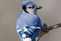 《 beautiful birds 》