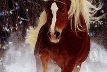 Horses / Horses