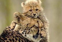 Dieren / Mooie dierenfoto's waar veel gevoel in zit. Gr. Mette