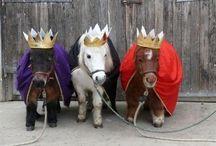 Paarden / Mooie paarden met mooie belevingen. Gr. Mette