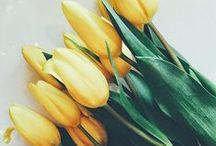 Seasonal: Spring / A fresh start for us all