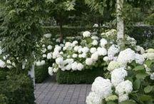 Suggestioni giardinicole