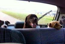 onze honden / onze honden met hun bezoek