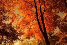 Beauty colours of autumn