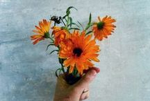 Blommor / Bilder tagna av mig - besök min blogg: Fames.se/melaniefreij